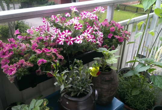 blommor balkong