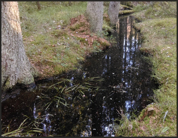 svartvatten