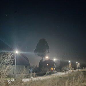 Vargmåne